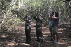 Birding in Cuba - April 5