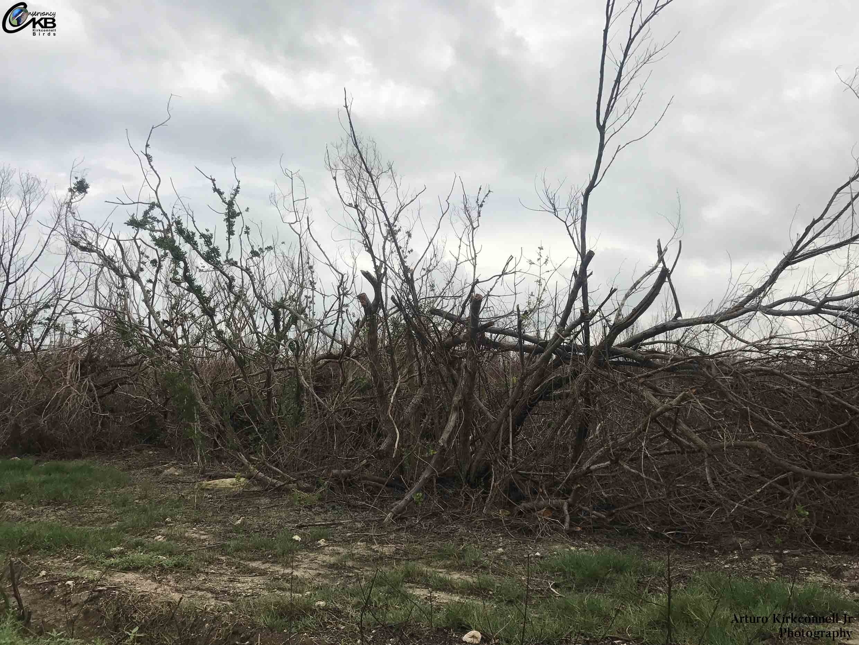 hurricane irma impact cayo coco 2