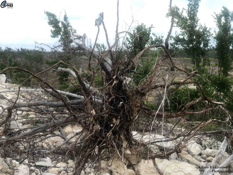 hurricane irma impact cayo coco 6